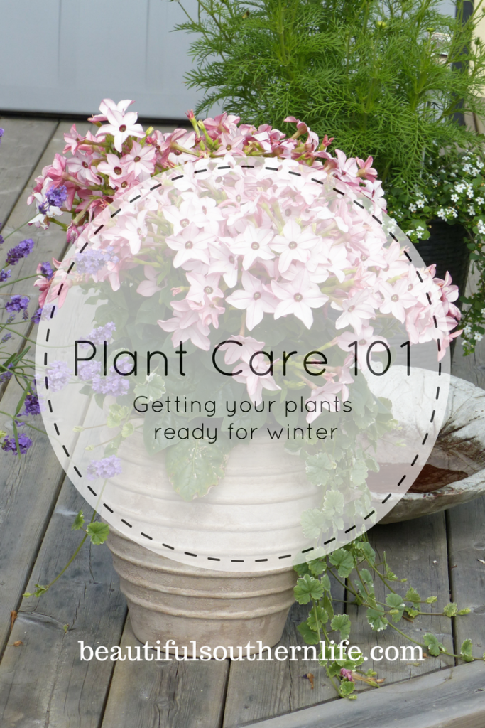 How to prepare your plants to come inside for the winter months.